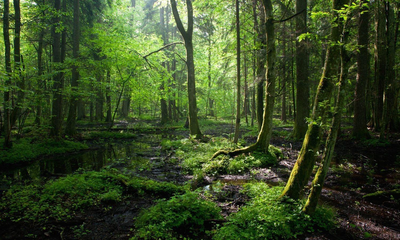 Събирането на опасни отпадъци и екологията в XXI век