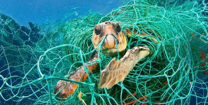 Костенурка в капан от пластмаса